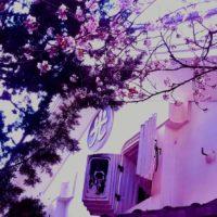 ヒカリヤの桜